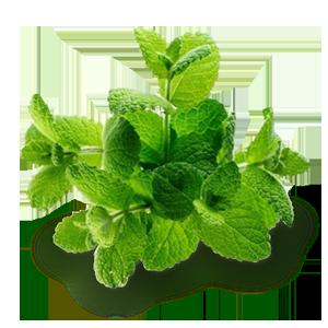 melissa-limonnaya